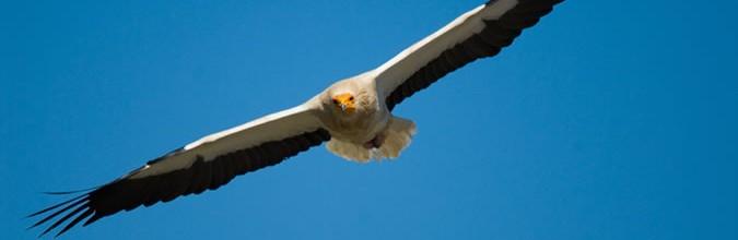 Turismo ornitológico en la Sierra de Guara