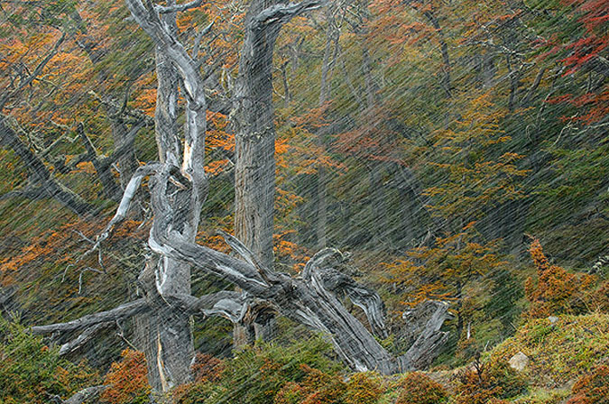 Foto realizada por Daniel Jara, segundo premio en la sección de plantas del Wildlife photographer del 2011